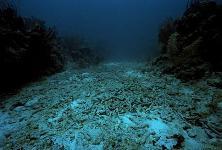 Дайвинг и рифы Хургады
