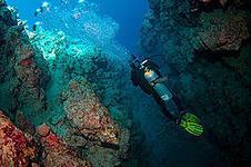 Подводный мир Дахаба