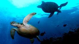 Сипадан - остров черепах