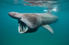 Большие акулы мира