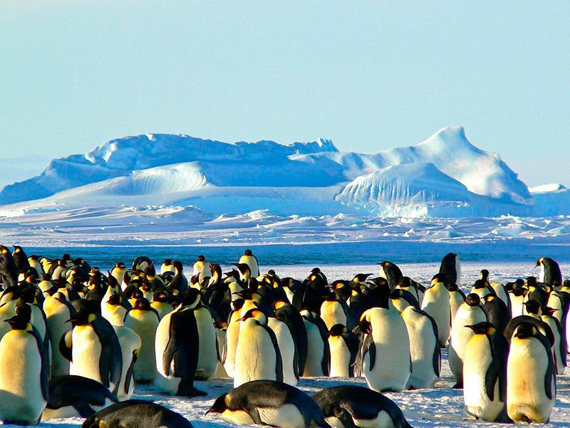путешествие вокруг антарктиды