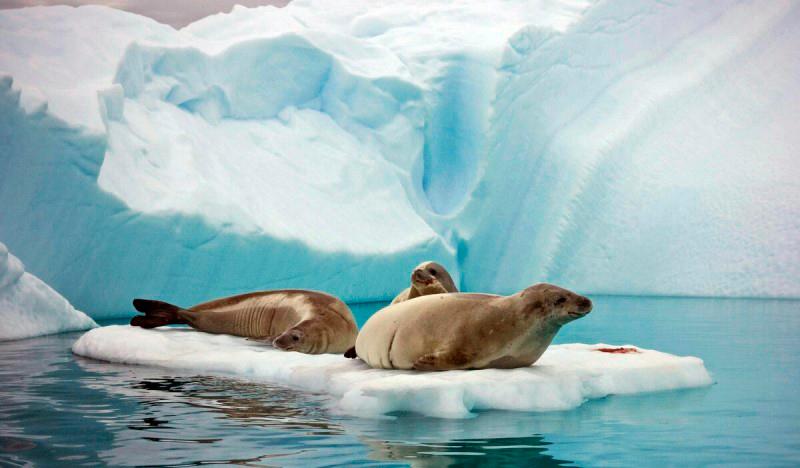 антарктида путешествие