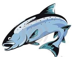Морская рыба лосось