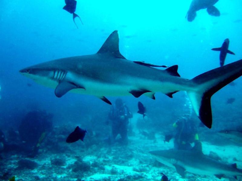акулы Судана