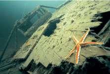 Таинственный подводный мир Белого моря