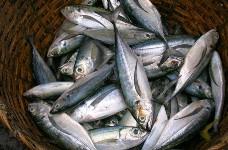 Отравление морепродуктами на отдыхе