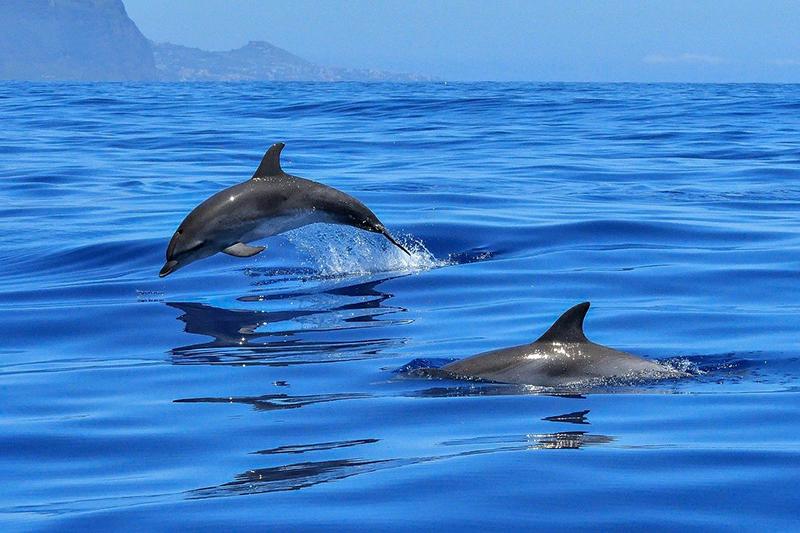 дельфин морское животное