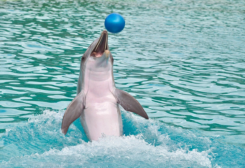 дельфины верные животные
