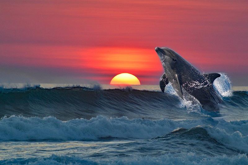 Морские дельфины