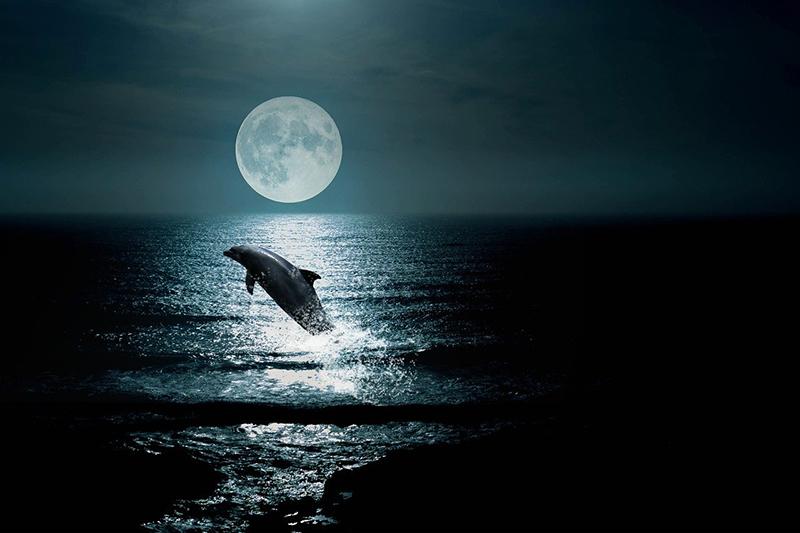 дельфин описание животного