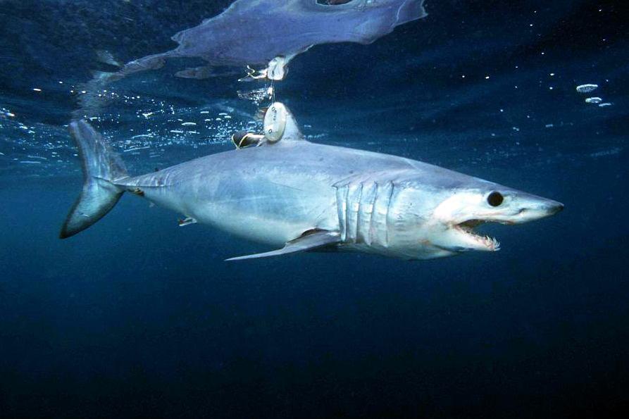 опасные морские хищники