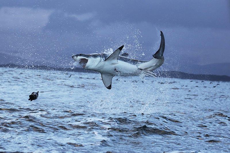 самый опасный морской хищник