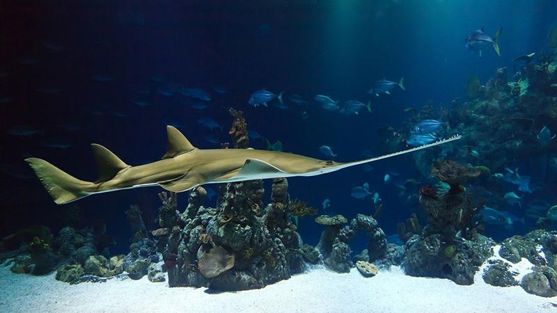 морские рыбы хищники