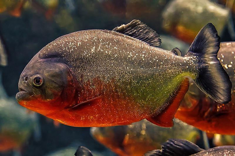 хищники подводного мира